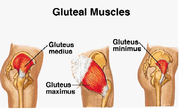 Is Your Low Back Hip Or Knee Pain Caused By Gluteal Amnesia