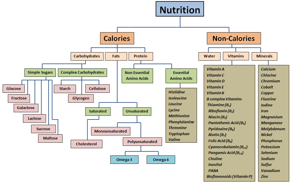 What Is A Macronutrient Definition For Kids