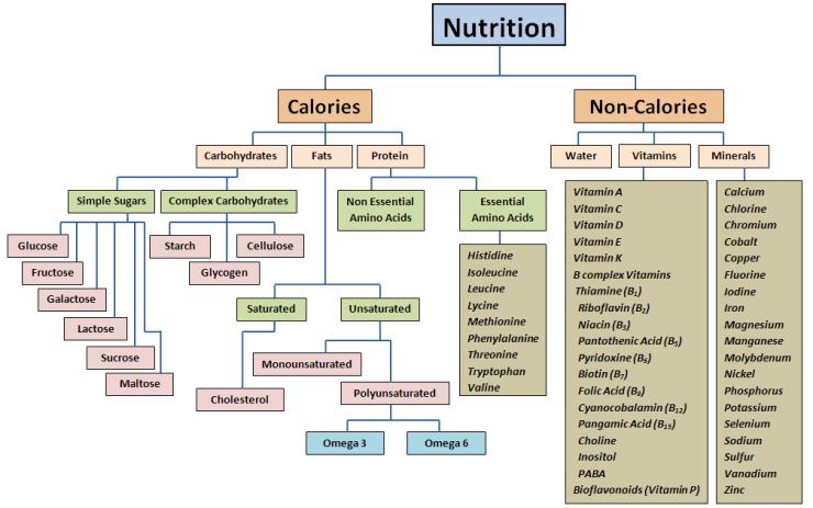 nutritionflowchart