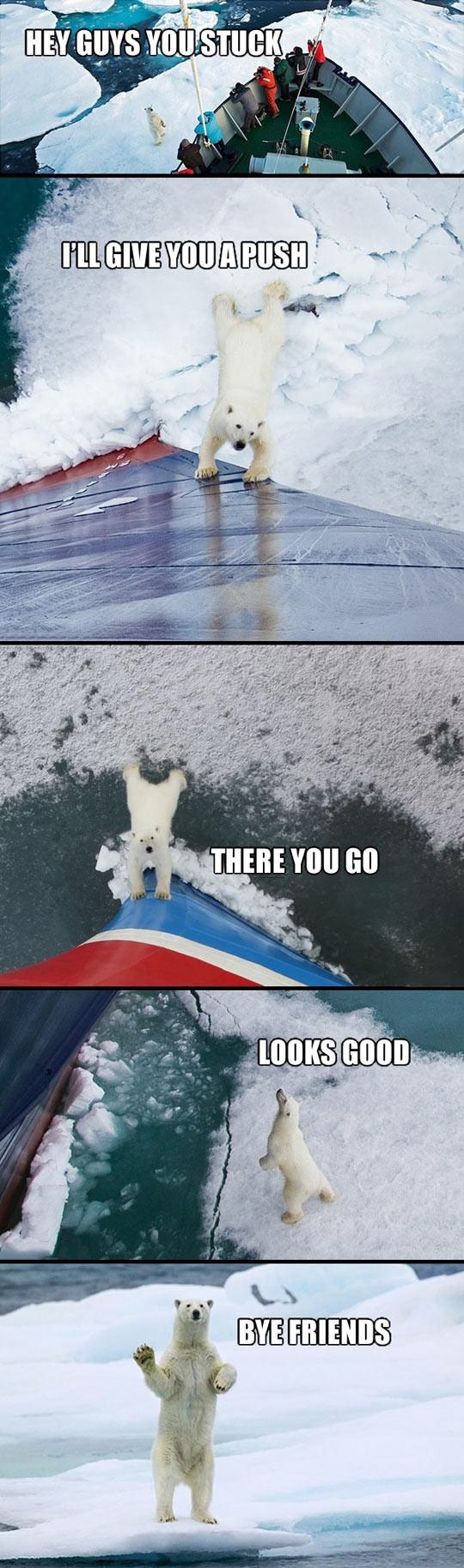 PolarBearPush