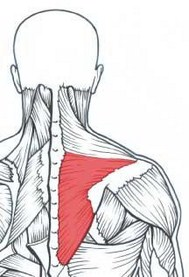lower-trapezius [320x200]