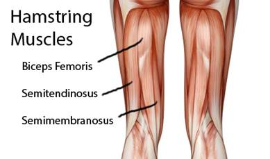 Are Your Hamstrings *Really* Tight? Let\'s Talk About It – Harold Gibbons