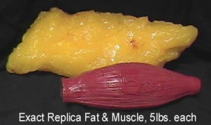fat-v-muscle1