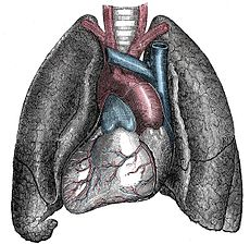 230px-Situs_inversus_-_Mirrored_heart_and_lungs